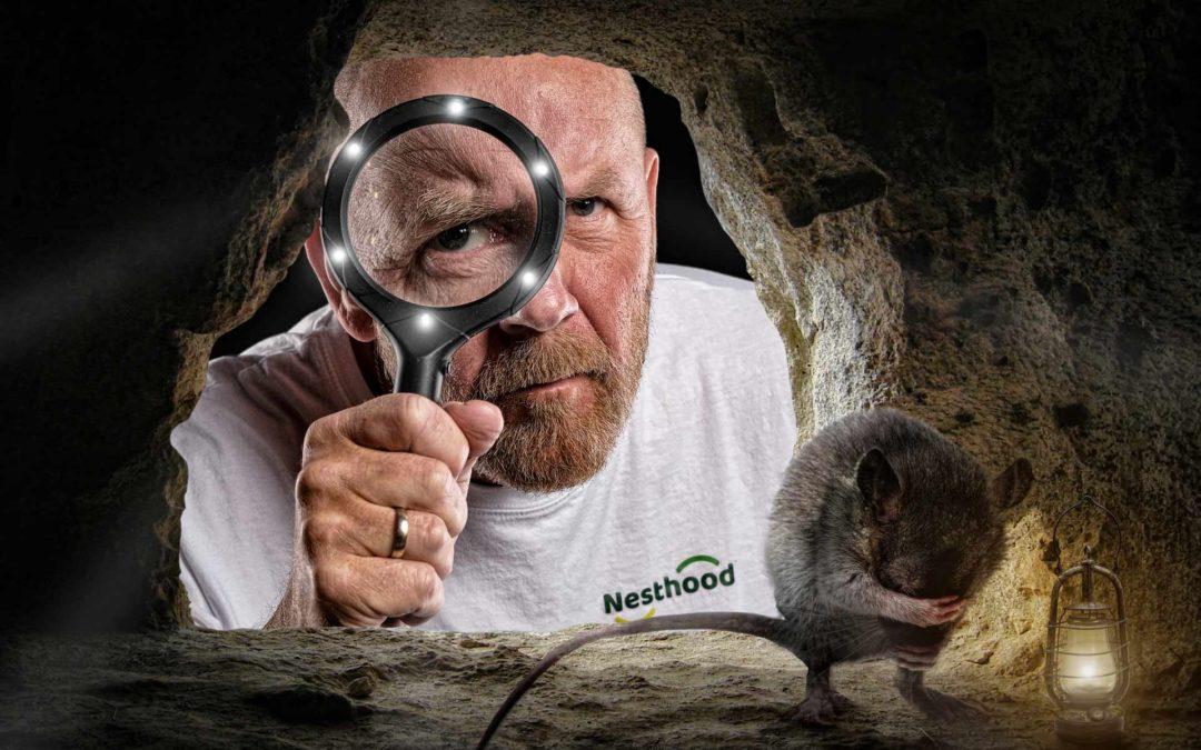 Nå flytter mus og rotter inn…