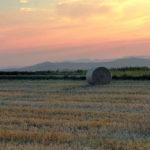 Skadedyrkontroll i landbruket