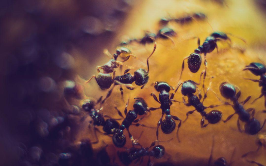 Maur kan våkne til liv – også i Februar!