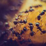 Maur kan våkne til liv – også i Februar